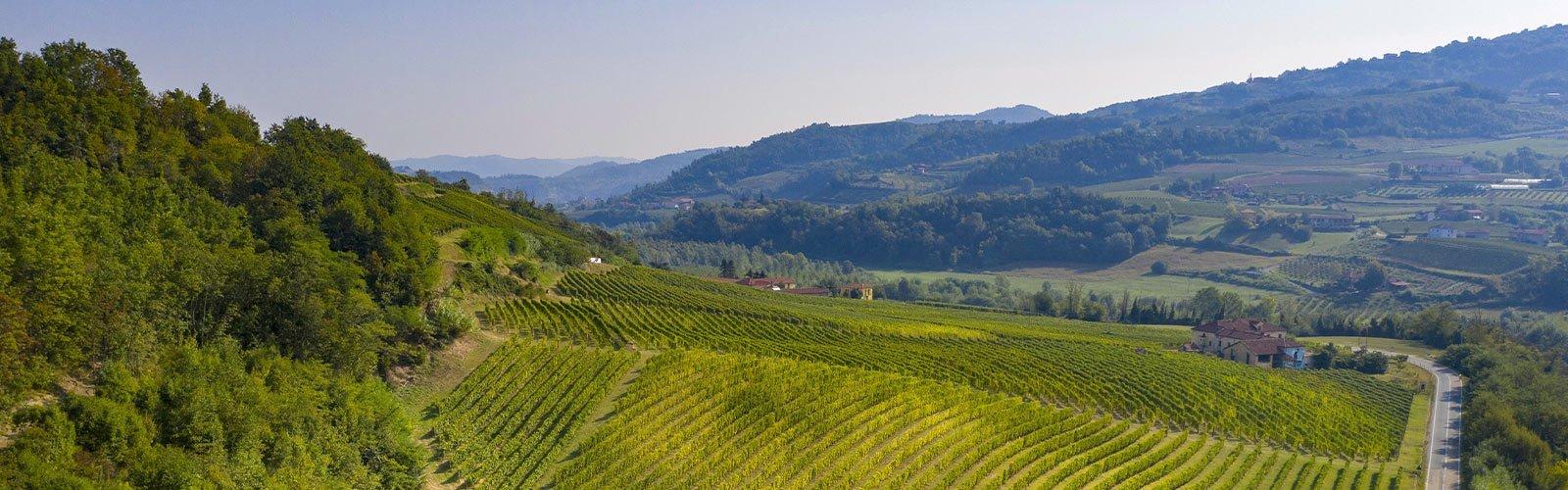 Tra due mondi, tra boschi, noccioleti e vigne, Cavallero fa vini di confine