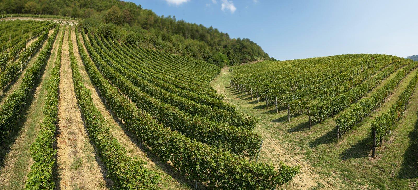 I vini Cavallero sono vini di confine